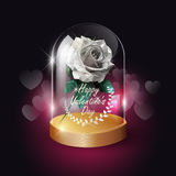 Transparent glass dome and white rose lowpoly style on heart bokeh background with Valentine`s day concept, vector background Stock Photography