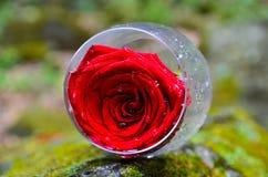 Glass, wine, flowers, nature, beautiful, summer, restaurant, day, communication. Transparent glass, flowers inside the glass, beautiful picture, summer day Stock Image