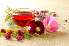 Transparent glass mug with red floral tea. Transparent glass mug with the hot red flower tea Royalty Free Stock Photos