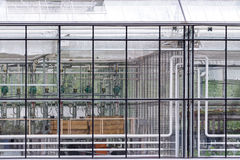 Transparent glass wall of greenhouse Stock Image