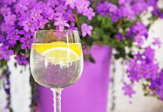 Transparent glass with water and a slice of lemon. Purple flowers background Royalty Free Stock Photos