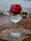 Glass, wine, flowers, nature, beautiful, summer, restaurant, day, communication. Transparent glass of wine, flowers inside the glass, beautiful picture, summer Royalty Free Stock Photography