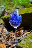 Glass, wine, flowers, nature, beautiful, summer, restaurant, day, communication. Transparent glass of wine, flowers inside the glass, beautiful picture, summer Stock Images