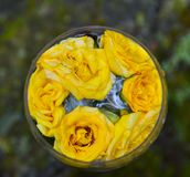 Glass, wine, flowers, nature, beautiful, summer, restaurant, day, communication. Transparent glass of wine, flowers inside the glass, beautiful picture, summer Royalty Free Stock Photo