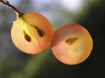 Transparent Grape Royalty Free Stock Images