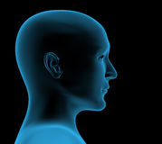 Transparent head of the person - x-ray Stock Photography