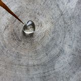 Transparent heart on a rough surface of weathered stamp with rings of old wood and a crack. Perfect Valentine`s Day greeting card stock photo