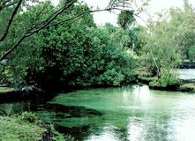The Transparent Ice Pond Surrounded by Green Trees. Big Island, Hilo, Hawaii Stock Image