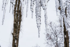 Transparent  icicles on overcast sky backgrounds Royalty Free Stock Image