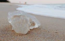 Transparent jellyfish Royalty Free Stock Image