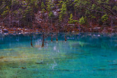 Transparent lake water Royalty Free Stock Photography