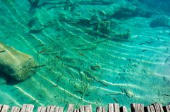 Transparent lake water with fish Royalty Free Stock Image