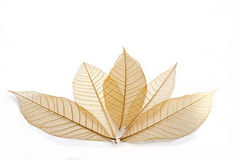 Transparent leaf. On white background Royalty Free Stock Image