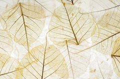 Transparent leaves royalty free stock photography