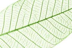 Transparent leaves Stock Photo