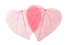 Transparent leaves Stock Images