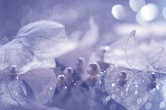Transparent leaves and pearls. Artistic composition of a skeleton of leaves and pearls. Transparent leaves and pearls. Artistic composition of a skeleton of stock images