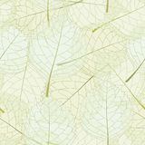 Transparent leaves Stock Photography