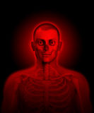 Transparent Man. X rayed man with bones and flesh visible Royalty Free Stock Images