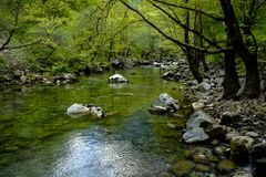 A transparent mountain river flows between stones and green trees Stock Photography