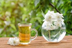 Transparent mug of tea and a vase with jasmine on a wooden table, greens on the background, sunlight Royalty Free Stock Image