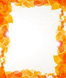 Orange petals frame. Transparent orange petals on a white background. Abstract frame with place for text Stock Photos