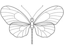 Outline Butterfly. The transparent outlinear skeleton of the Butterfly for various design Royalty Free Stock Photo