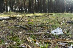 A transparent plastic Cup in the forest. Problem of ecology.  stock images