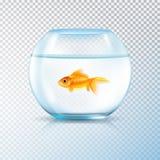 Transparent réaliste de cuvette d'or de poissons illustration stock