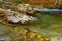 Transparent river Royalty Free Stock Image