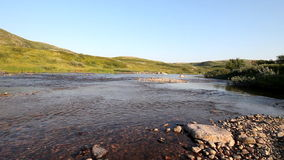 Transparent salmon river in the tundra stock video