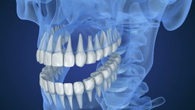 Transparent scull and teeth , xray view . 3D animation stock video