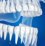 Transparent scull and teeth , xray view Royalty Free Stock Image