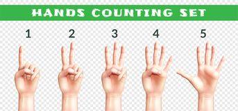 Transparent Set Of Counting Hands. Set of men hands counting from one to five isolated on transparent background realistic vector illustration stock illustration