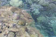 Transparent shallow water with reef rocky bottom, fading away to deeper area at top photo.  Royalty Free Stock Photo