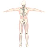 Transparent skeleton Royalty Free Stock Photography