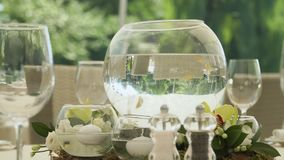 Aquarium with small golden fish at the table stock video footage