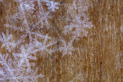 Transparent Snowflakes on wooden background. Real Snowflake Crystals on a wooden background with space for text Royalty Free Stock Photos