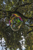 Transparent soap bubble Royalty Free Stock Images