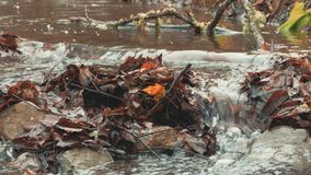 Transparent stream, close up. Forest landscape with creek in autumn, close up stock video