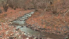 Transparent stream, close up. Forest landscape with creek in autumn, close up stock footage