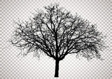 Transparent tree 0793 Royalty Free Stock Image