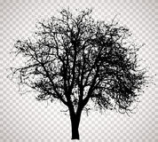 Transparent tree 3312 Royalty Free Stock Photography