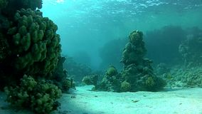 Transparent and warm water. Сlear water of the red sea. stock video