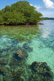 Transparent waters of the Caribbean sea Royalty Free Stock Photography