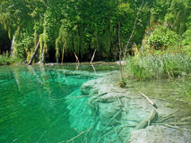 Transparent waters of Plitvice Lakes Royalty Free Stock Image