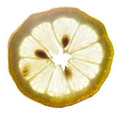 Transparent yellow lemon slice Royalty Free Stock Photography