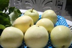 Transparente Blanche-Äpfel - ein Sommerapfel sehr süß und köstlich Stockbild