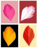 Transparente Farben der Rosen-Knospeblumenblätter Stockbilder