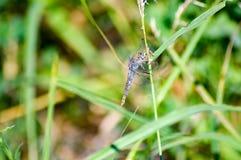 Transparente Libelle auf einem Stamm Stockfotos